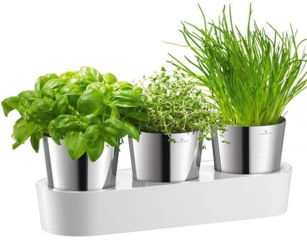 Auerhahn Kräutergarten - Herbs@Home