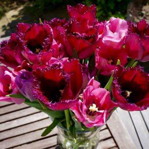 Bloomy Days
